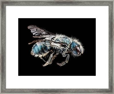 Mason Bee Framed Print by Us Geological Survey
