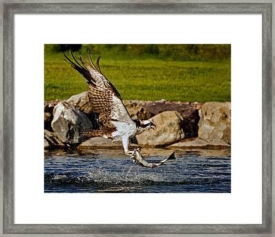 Master Fisherman Framed Print by Jack Bell