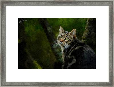 Master Of Disguise Framed Print by Marina Likholat