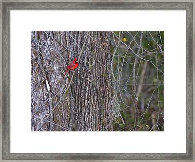 Master Of His Domain Framed Print by Dan Wells