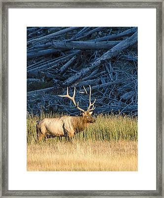 Master Of The Meadow Framed Print
