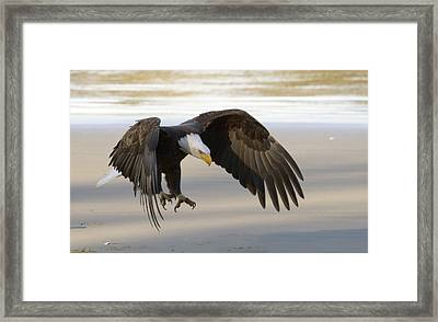 Master Of The Sky Framed Print by William Horden