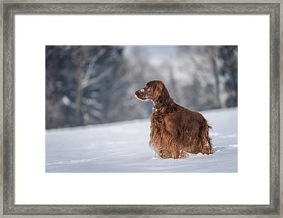 Master Of The Woods Framed Print by Robert Krajnc