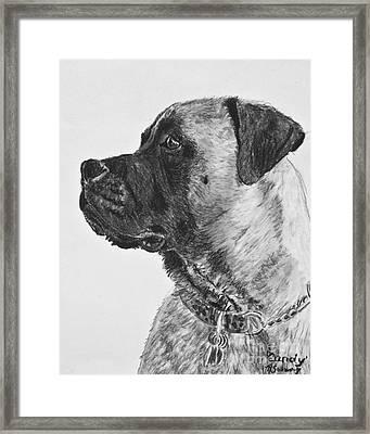Mastiff In Profile Framed Print