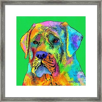Mastiff Framed Print by Marlene Watson