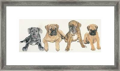 Mastiff Puppies Framed Print by Barbara Keith