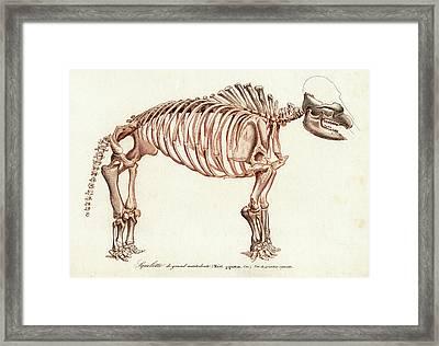 Mastodon Skeleton Framed Print by Collection Abecasis