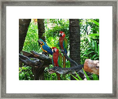 Mates Framed Print by Colleen Gerlach