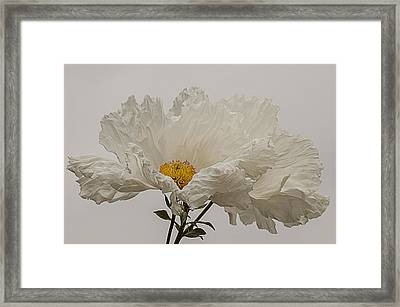 Matilija Poppy White On White Framed Print