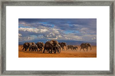 Matriarch On Amboseli Framed Print by Pieter Ras