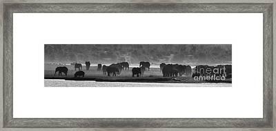 Matriarchs Framed Print