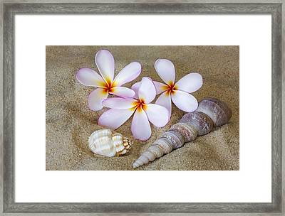 Maui Beach Treasures Framed Print by Susan Candelario