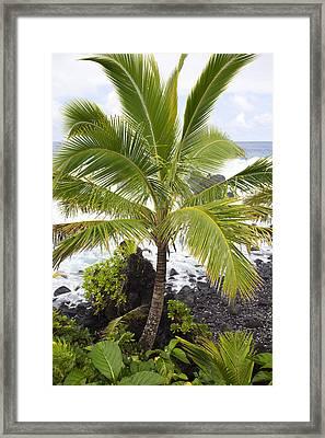 Maui Coast Framed Print by Jenna Szerlag