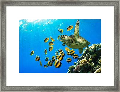 Maui Cruzer Framed Print by James Roemmling