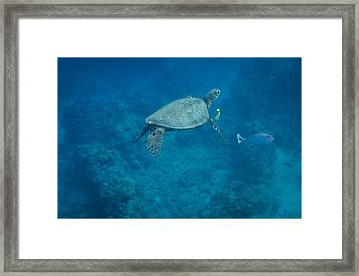 Maui Sea Turtle And Unicorn Fish Framed Print