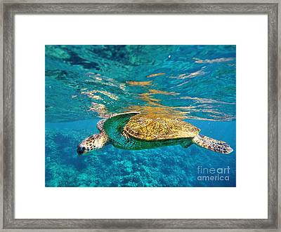 Maui Sea Turtle Framed Print by Birgit Tyrrell