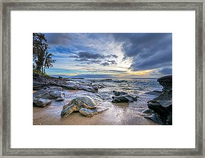 Maui Sea Turtle Framed Print