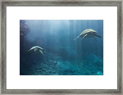 Maui Sea Turtles Farewell Framed Print