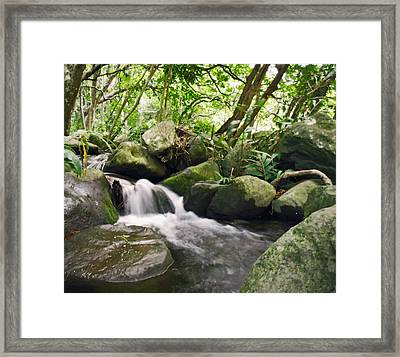 Maui Stream Framed Print by Sherry Dooley