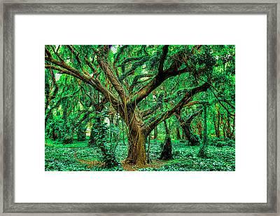 Maui Tree Framed Print