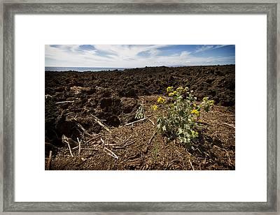 Maui's Lava Fields 1 Framed Print by Jessica Velasco