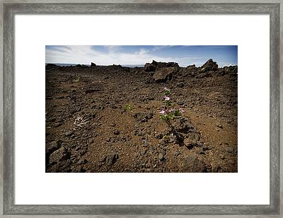 Maui's Lava Fields 2 Framed Print by Jessica Velasco