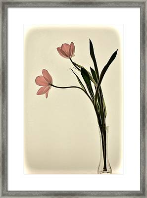 Mauve Tulips In Glass Vase Framed Print