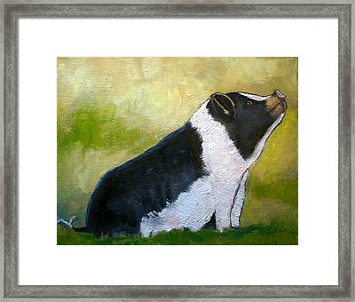 Max The Pig Framed Print