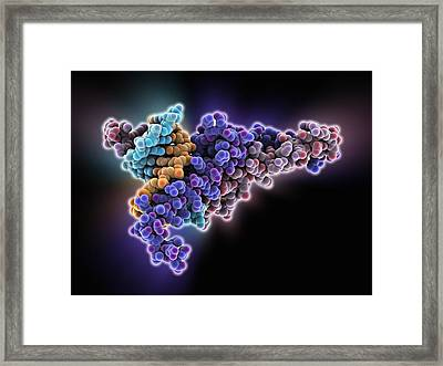 Max Transcription Factor-dna Complex Framed Print
