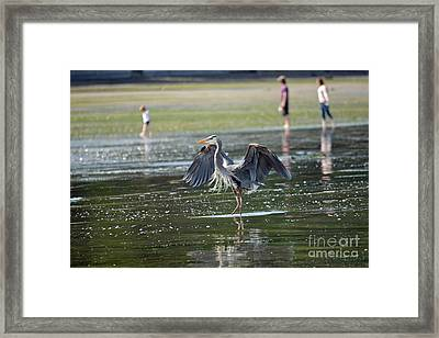 May Day Waders Framed Print