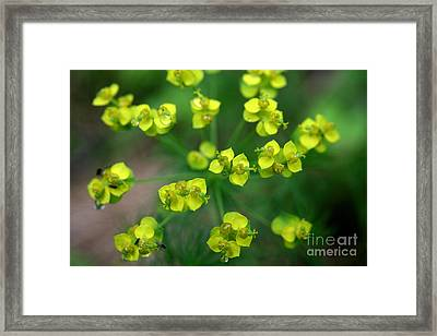May Explosion Framed Print by Neal Eslinger