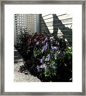 May Flowers Fresco Framed Print