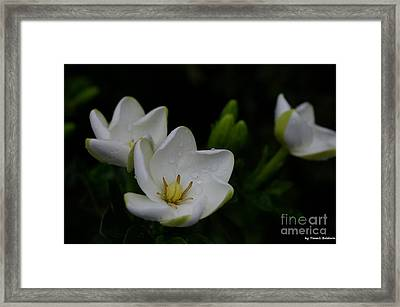 Framed Print featuring the photograph May Flowers by Tannis  Baldwin