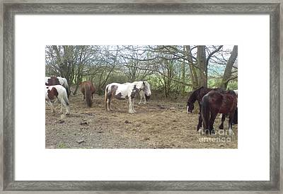 May Hill Ponies 1 Framed Print