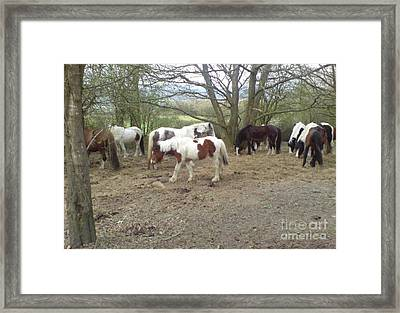 May Hill Ponies 2 Framed Print