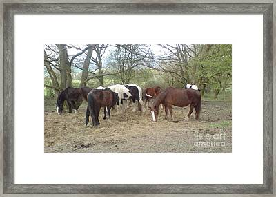 May Hill Ponies 3 Framed Print
