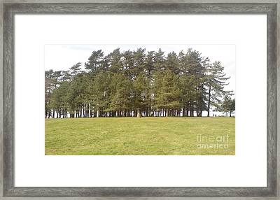 May Hill Tree Tops Framed Print