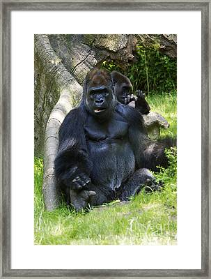 May I Help You? Framed Print