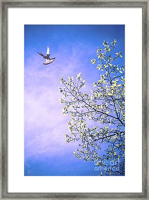 May Morning Framed Print by Jan Bickerton
