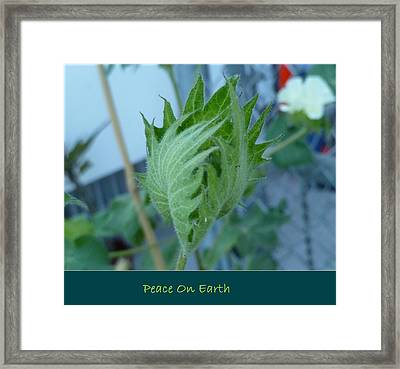 May Peace On Earth Framed Print
