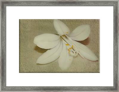 Maybelline Framed Print by Elaine Teague