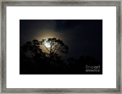 May's Flower Moon Framed Print by Lynda Dawson-Youngclaus