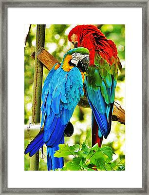 Framed Print featuring the photograph Mccaws by Al Fritz