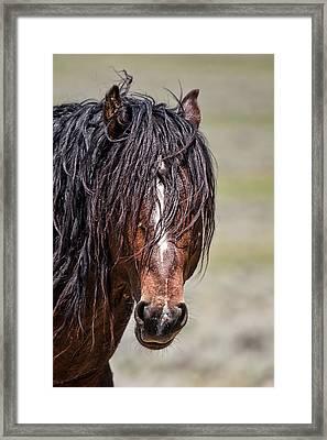 Mccullough Peaks Stallion Framed Print by Jana Thompson