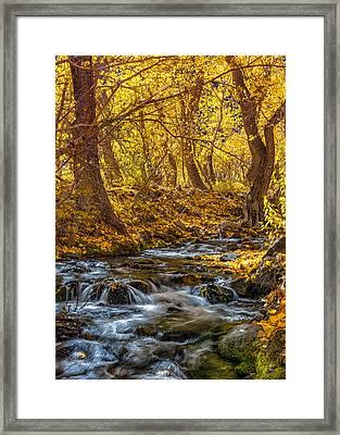 Mcgee Creek Framed Print
