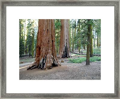 Mckinley Grove 7 Framed Print
