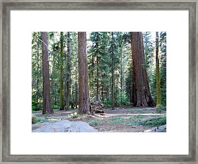 Mckinley Grove Framed Print