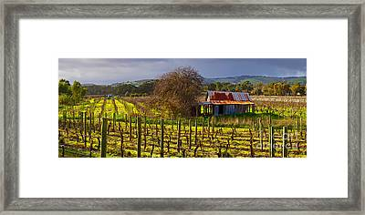 Mclaren Flat Vineyard Framed Print