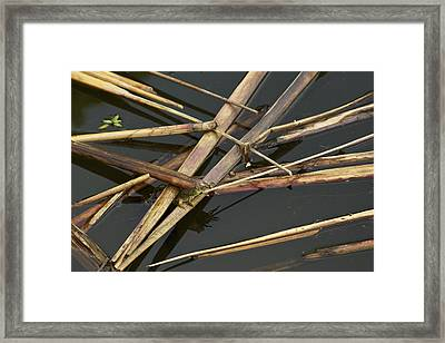 Framed Print featuring the photograph Me And My Shadow - A Frog In The Pond by Jane Eleanor Nicholas