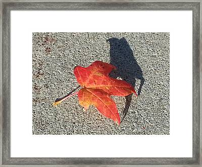 Framed Print featuring the photograph Me And My Shadow by Caryl J Bohn